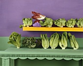 An assortment of lettuces and salad leaves
