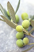 Olive sprig with green olives