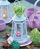 Hortensie auf weisser Laterne mit Teelicht
