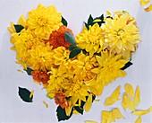 Herz aus gelben Dahlien