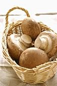 Chestnut mushrooms in a basket