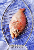 Raw fish for grilling