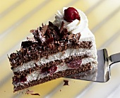 Piece of Black Forest gateau on cake server