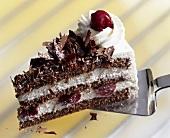 Piece of Black Forest gateau on cake server