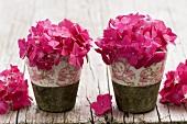 Hydrangeas in pots on wooden table