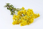 Ragwort (Senecio jacobaea) with flowers