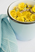 Coltsfoot flowers in a blue pot