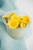 Coltsfoot flowers in a small blue bowl