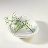 Dill sprig in white dish