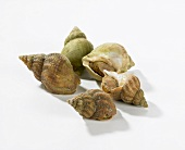 Five cooked sea snails