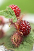 Japanese wineberries with leaves