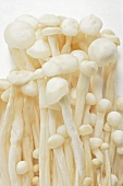 Enokitake mushrooms (close-up)
