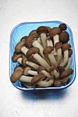 King oyster mushrooms in plastic punnet
