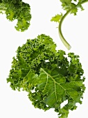 Several kale leaves