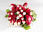 Red radishes with white tips, a bunch