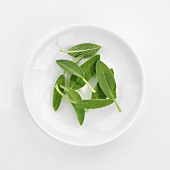 Fresh sage leaves in white dish