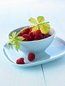 Raspberries and raspberry branch in blue bowl
