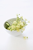 Lime blossom in a small bowl