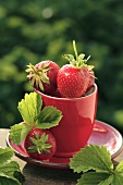 Strawberries in red cup and saucer on table out of doors
