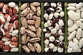 Various beans in a type case (overhead view)