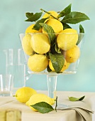 Lemons with leaves in stemmed glass bowl on table