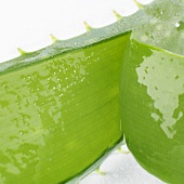 Aloe vera leaf, cut open (close-up)