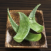 Aloe vera leaves with drops of water in wooden dish