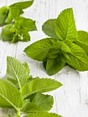 Fresh apple mint on white painted wooden background