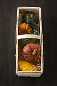 Assorted pumpkins and squashes in a woodchip basket