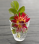 A dahlia and strawberry leaves in a glass of water