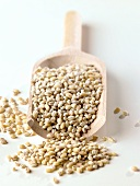 Pearl barley on wooden scoop