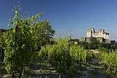 Vines with Castello di Torrechiara in background, Italy
