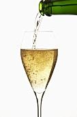 Champagner in Glas einschenken