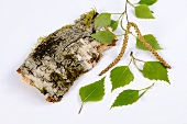 Birch leaves and birch bark