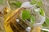 Birch leaf tea in glass teapot