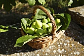 Green figs with leaves in a basket