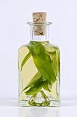 Ramsons (wild garlic) oil in bottle