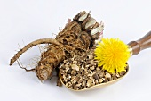 Dandelion root, fresh and dried with flower