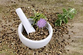 Milk thistle (fresh and dried) with mortar and pestle