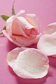 Candied rose petals