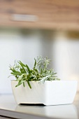 Rosemary in a small white dish