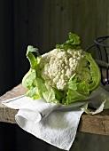 A cauliflower on a dish cloth