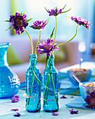 Witwenblume in blauen Flaschen