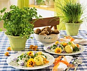 Boiled potatoes with herb quark & edible flowers, herbs in pots