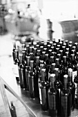 Wine bottles (black and white photo)