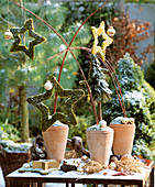 Christmas arrangement: terracotta pots with moss stars