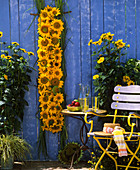 Wall decoration: Chinese silvergrass (Miscanthus) & sunflowers