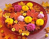 Schale mit Schwimmkerzen und Chrysanthemen