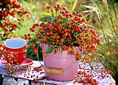 Various types of rose hip in a pink bucket