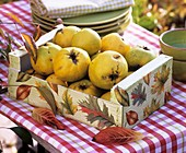 Quince in wooden box decorated with autumn leaves
